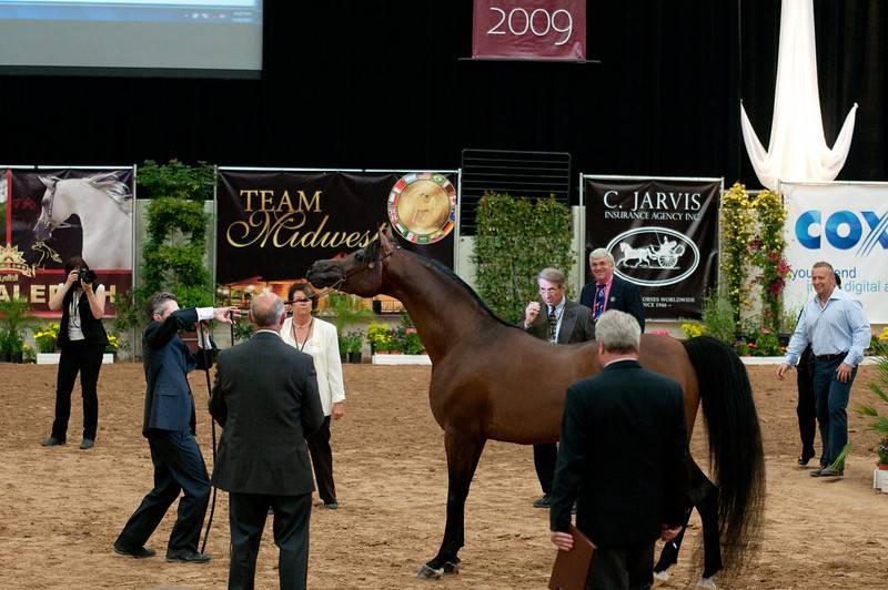 Sr stallion 5yr-5377