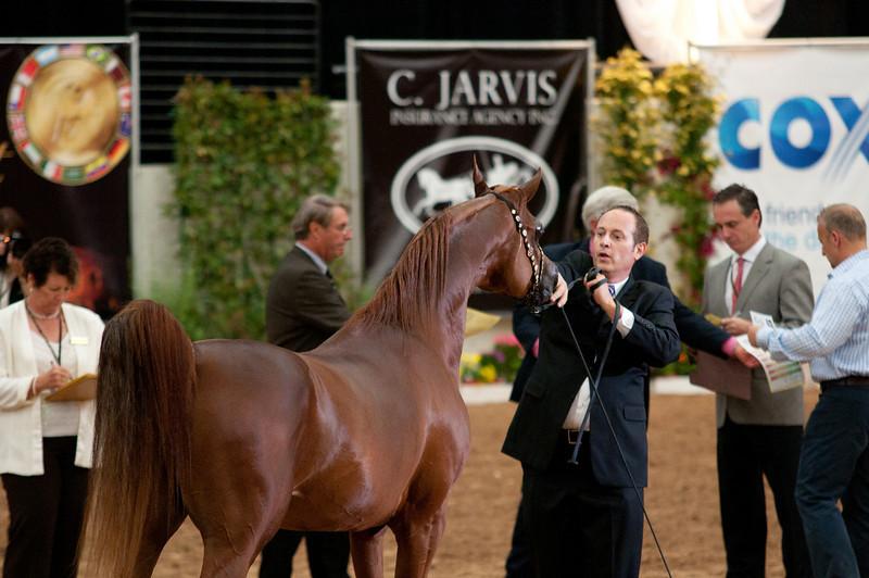 Sr stallion 5yr-5352