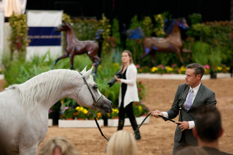 Sr stallion 5yr-5481