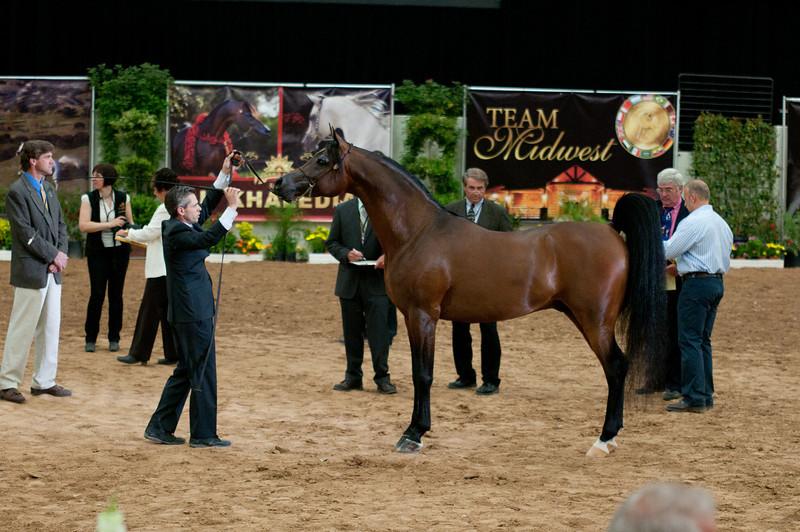 Sr stallion 5yr-5391