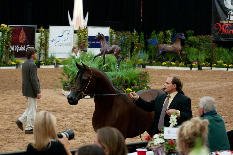 Sr stallion 5yr-5333