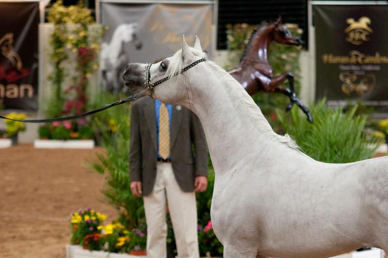 Sr stallion 5yr-5467