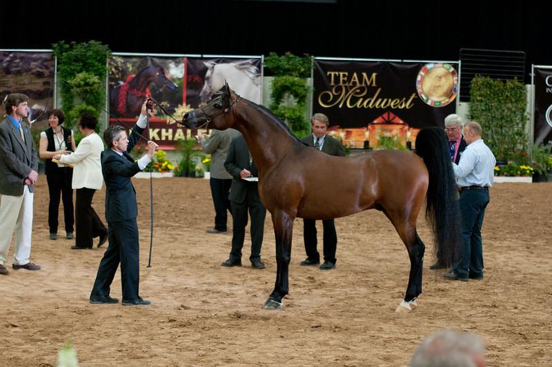 Sr stallion 5yr-5392