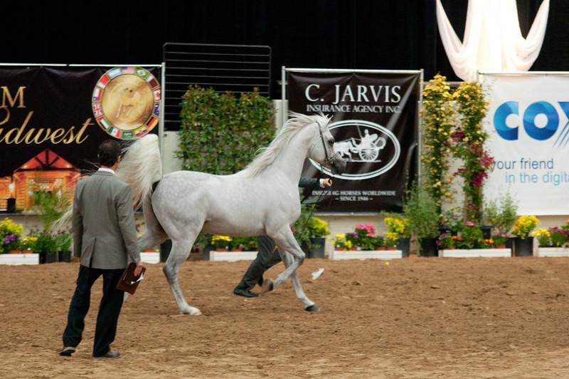 Sr stallion 5yr-5427
