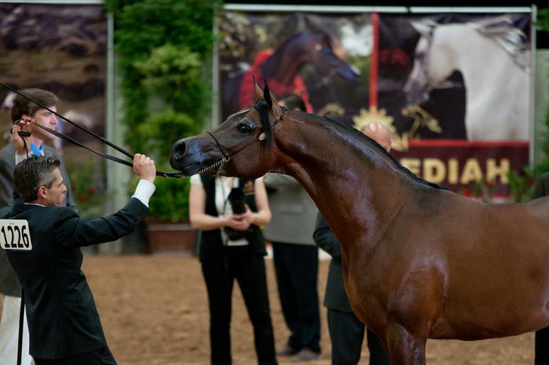 Sr stallion 5yr-5394