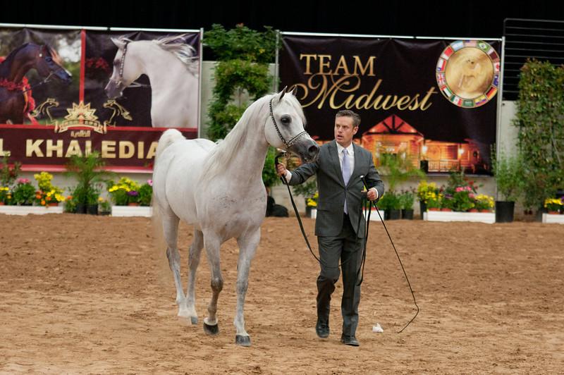 Sr stallion 5yr-5455