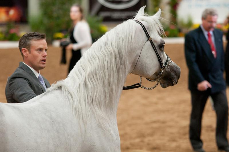 Sr stallion 5yr-5451