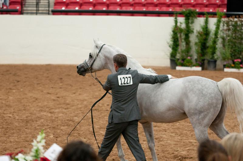 Sr stallion 5yr-5489