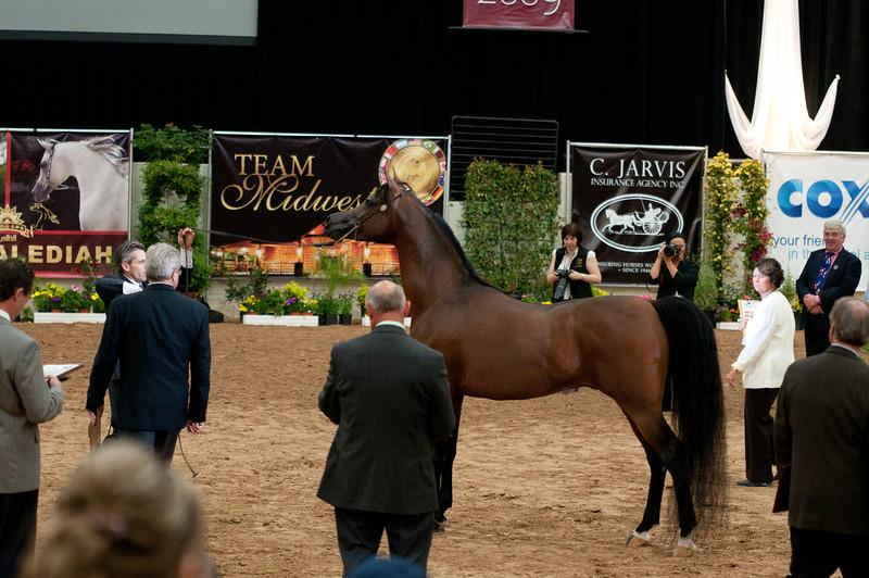 Sr stallion 5yr-5369