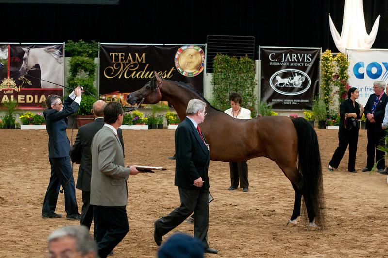 Sr stallion 5yr-5373