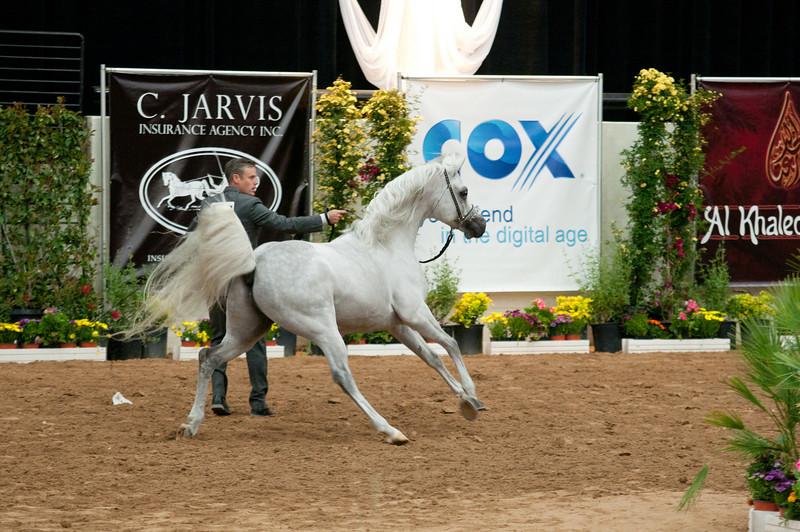 Sr stallion 5yr-5424