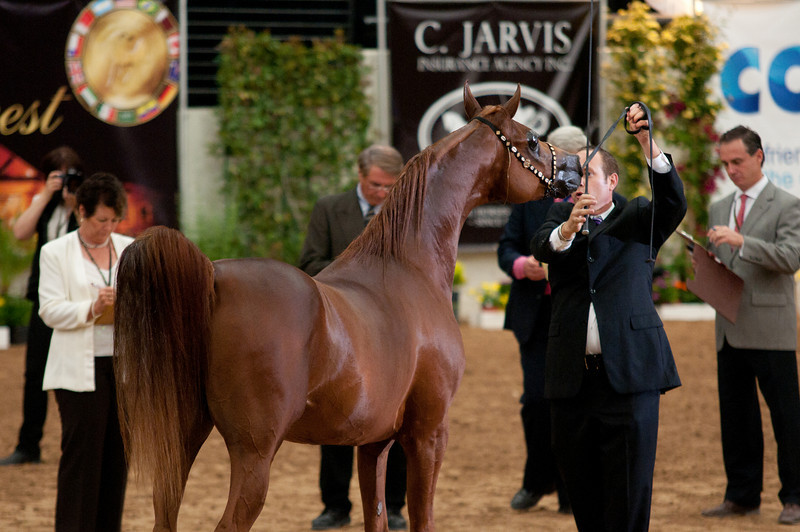 Sr stallion 5yr-5350
