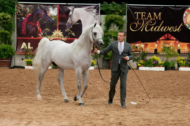 Sr stallion 5yr-5454