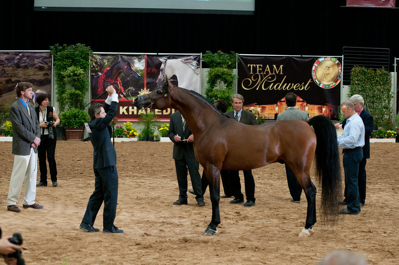 Sr stallion 5yr-5389