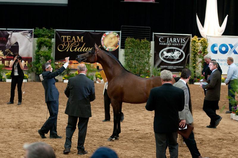 Sr stallion 5yr-5376