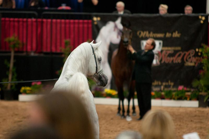 Sr stallion 5yr-5314