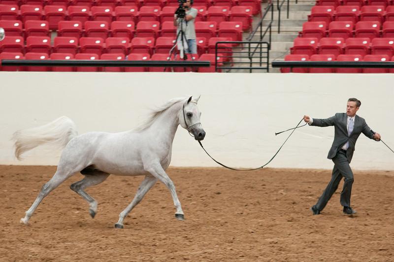 Sr stallion 5yr-2