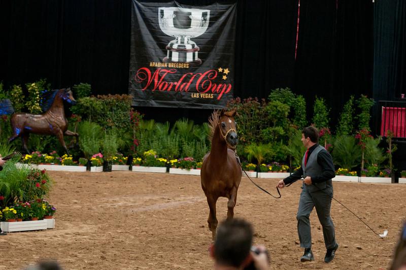 Sr stallion 5yr-5168