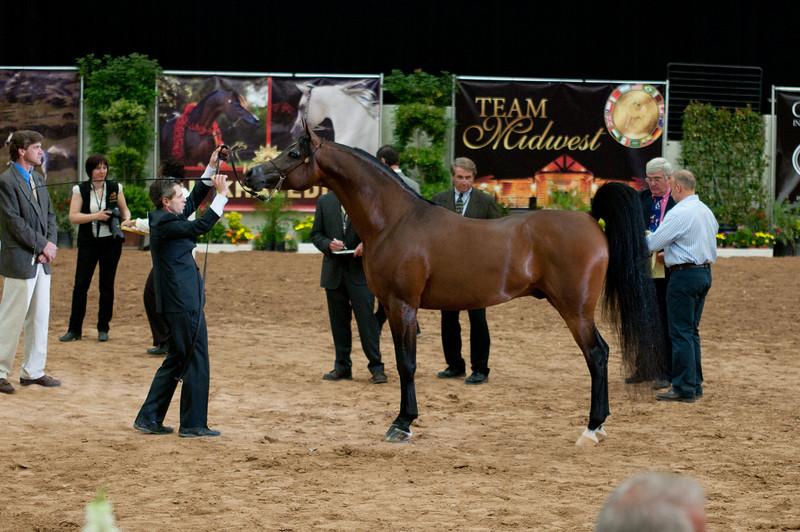Sr stallion 5yr-5390