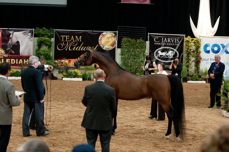 Sr stallion 5yr-5371