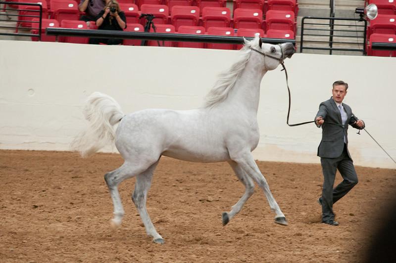 Sr stallion 5yr-5408