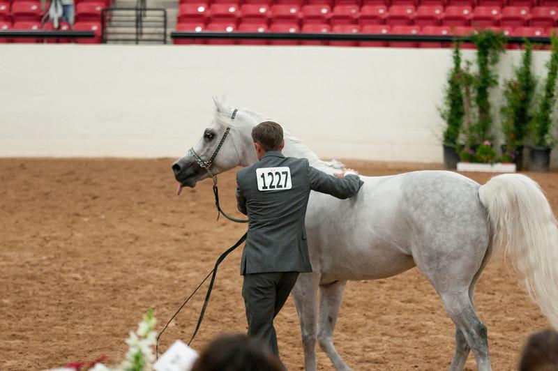 Sr stallion 5yr-5490