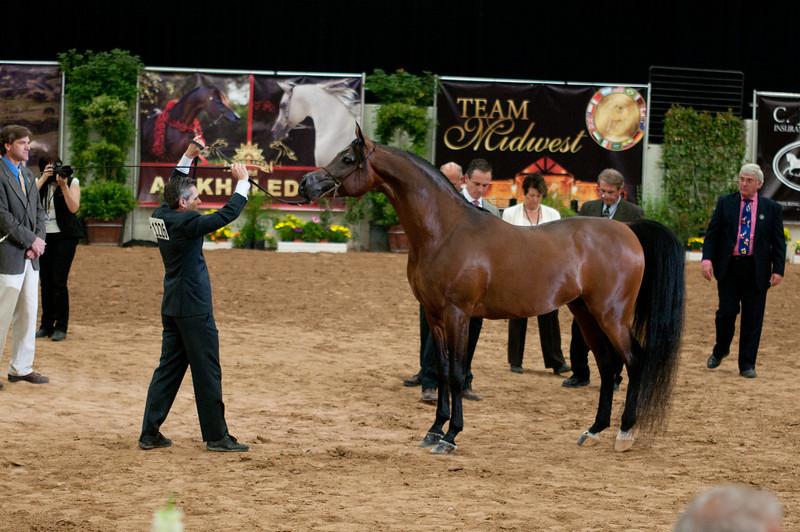 Sr stallion 5yr-5383