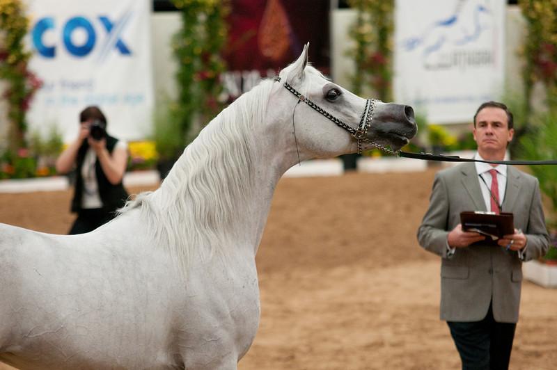 Sr stallion 5yr-5475
