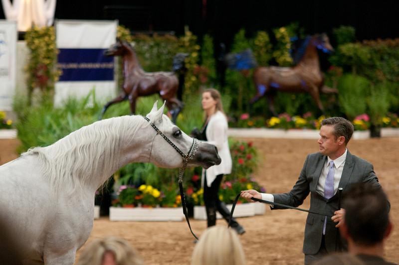 Sr stallion 5yr-5482