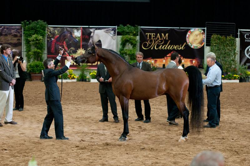 Sr stallion 5yr-5386
