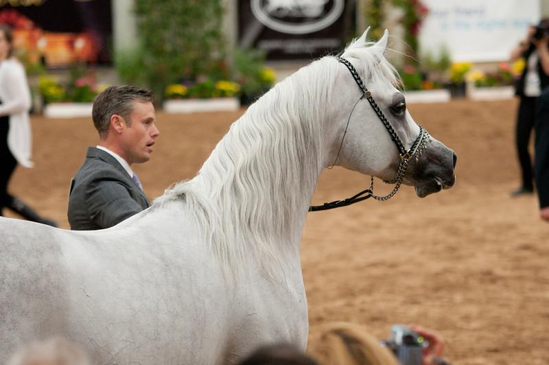 Sr stallion 5yr-5452