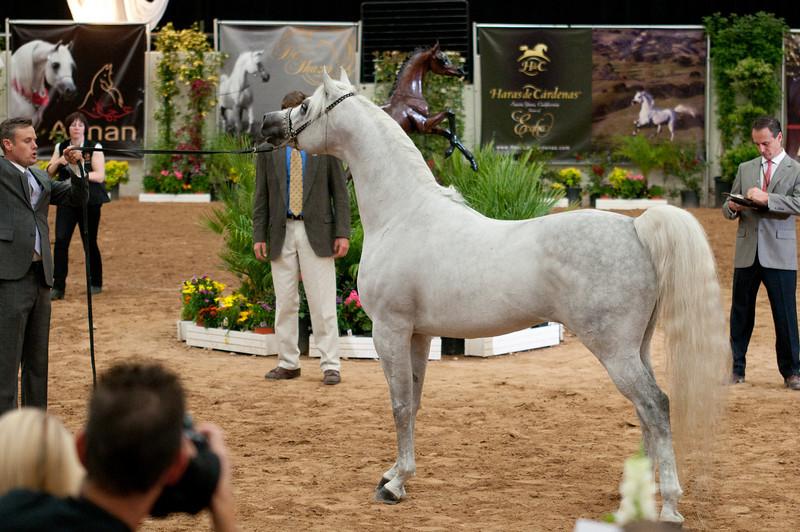Sr stallion 5yr-5465