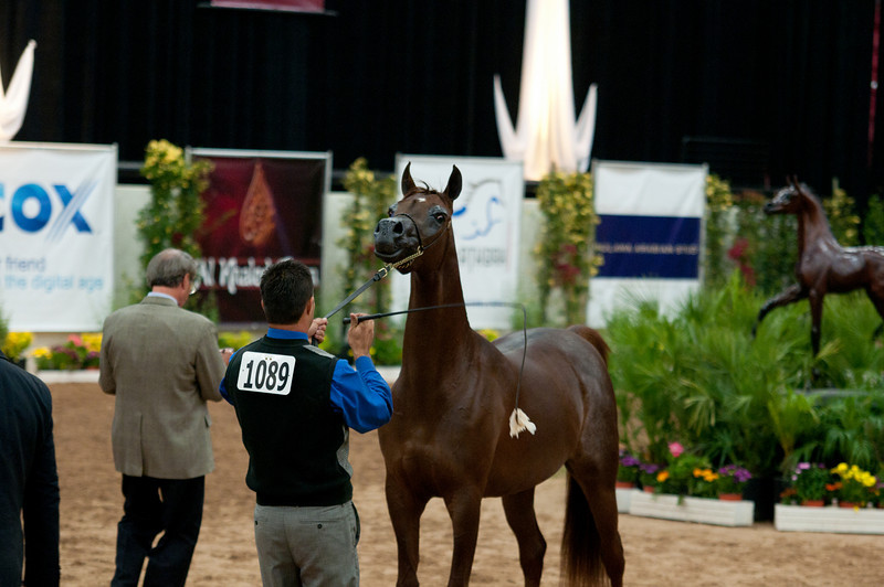 fillies of 2008 Sac A-3778