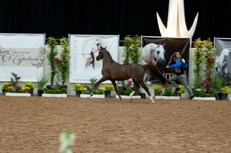 fillies of 2008 Sac A-3773