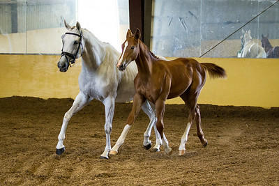 Horse 70