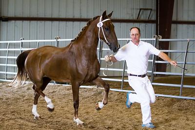 Horse 72