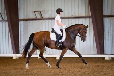 Horse 73