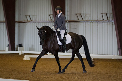 Horse 74