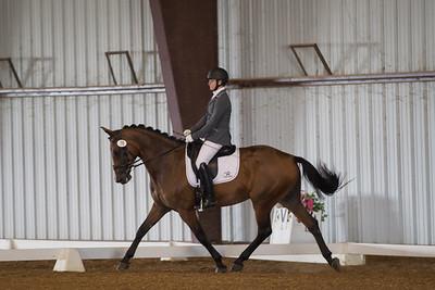 Horse 78