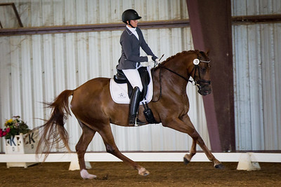 Horse 79