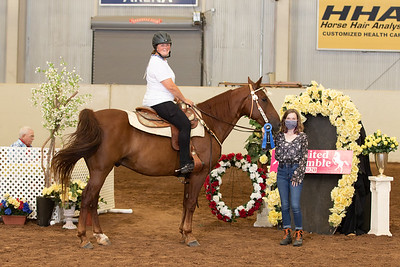 43A - Dis Not My Horse - Eng/Wes 2 gait