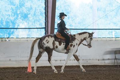 Horse 17