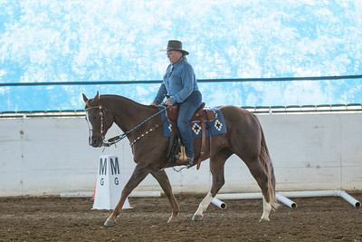 Horse 19
