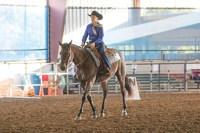 Horse 24