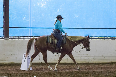 Horse 25