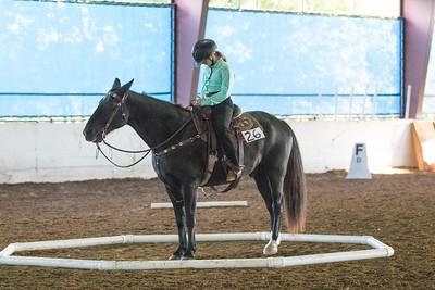 Horse 26