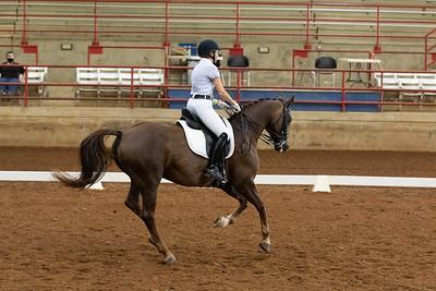 Horse 204