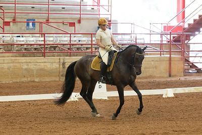 Horse 207