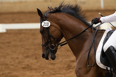 Horse 210