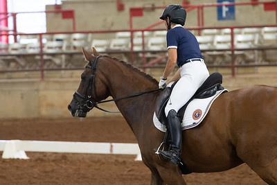 Horse 215